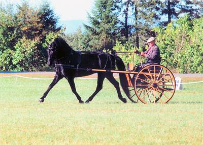Horse Training, Sales, Boarding - A Horse Drawn Affair, Ancramdale NY